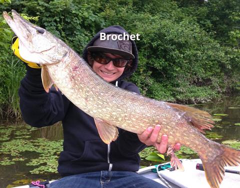 Brochets