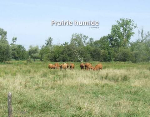 Prairies humides