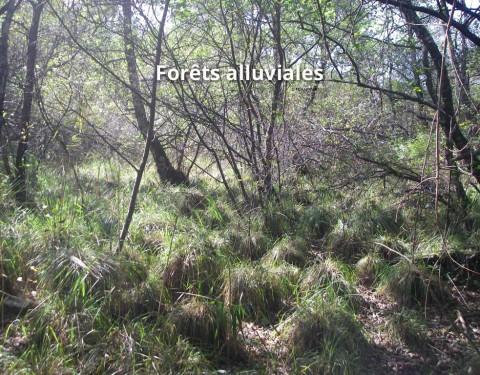 Forêts alluviales