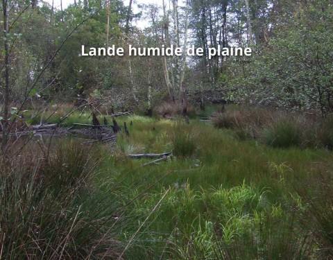 Landes humides de plaine